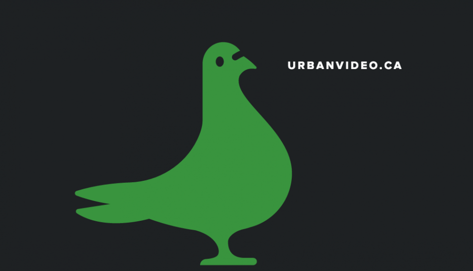 Urban Video pigeon
